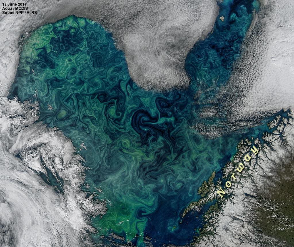 A phytoplankton bloom highlighting the swirling, eddying nature of our oceans